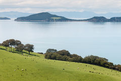 Pakihi Island with Coromandel in background Royalty Free Stock Image