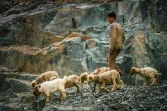 Pakistani shepherd Royalty Free Stock Photography