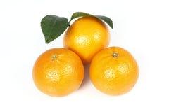 pakistanska mandarins Arkivbilder