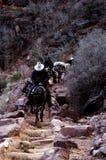 pakowanie kawałków jarów stada mułów pociąg Zdjęcia Royalty Free