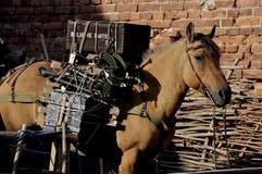 Pakpaard Stock Afbeelding