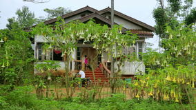 PAKSE, LAOS - MARCH 2014: village house with orchids flowers, stock video footage