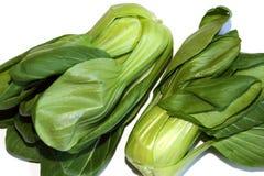 Paksoi è brassica campestris di verdure tuberosa del officieel Immagine Stock Libera da Diritti