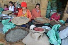Paksong, Bolaven高原,老挝 图库摄影