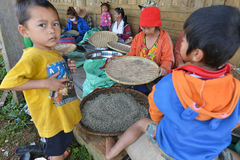 Paksong, plateau de Bolaven, Laos photo libre de droits