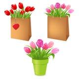 pakunków tulipany Obraz Stock