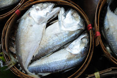 pakunku świeży tuńczyk Zdjęcia Stock