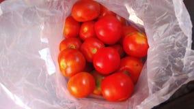 Pakunku pomidor zdjęcia royalty free