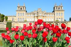 Palácio de Blenheim com tulipas vermelhas Foto de Stock