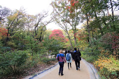 Palácio de Changdeokgung Fotografia de Stock
