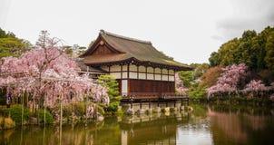 Palácio de madeira antigo com flor de cerejeira foto de stock royalty free