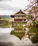 Palácio de madeira antigo com flor de cerejeira fotos de stock royalty free