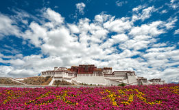 Palácio de Potala em Tibet com primeiro plano das flores foto de stock