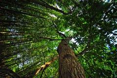 palétuvier de forêt Image libre de droits