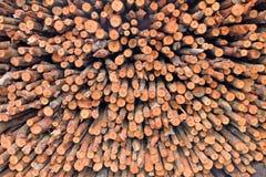 Palétuvier pour la brûlure le charbon de bois Image stock