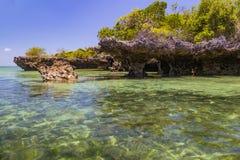 Palétuviers dans la lagune d'océan Île de Kwale zanzibar image libre de droits