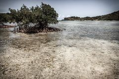 Palétuviers en Îles Vierges britanniques Photo libre de droits