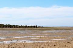 Palétuviers sur la plage Photographie stock libre de droits