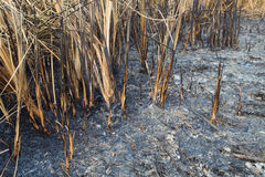 paląca śródpolna trawa był Fotografia Stock