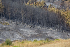 Paląca las rozciągliwość przy Grecja Obrazy Stock