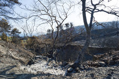 Paląca las rozciągliwość przy Grecja Zdjęcia Stock