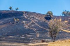 Paląca trawa na wzgórzach Australijska wieś Fotografia Royalty Free
