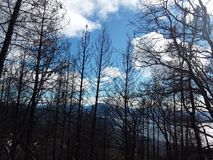 Palący Forrest drzewa zdjęcia royalty free