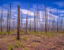 Palący za pożar lasu obraz royalty free