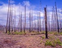 Palący za pożar lasu zdjęcie royalty free