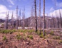 Palący za pożar lasu obrazy royalty free