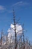 palący drzewo Zdjęcia Royalty Free