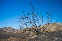 Palący drzewo na wzgórzu Obraz Royalty Free