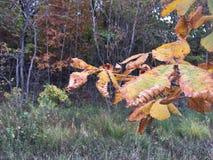 Pal opuszcza zakończenie, wczesny jesień las, drzewa Obrazy Stock
