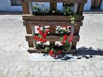 Pal z roślinami Zdjęcia Stock