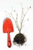 Pala del giardino con l'albero asciutto Immagini Stock Libere da Diritti