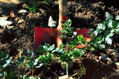 Pala roja en el montón de la tierra en un jardín Fotos de archivo libres de regalías