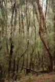 Palaau State Park Molokai Royalty Free Stock Image