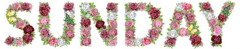 Palabra DOMINGO de las flores de la acuarela para la decoración libre illustration