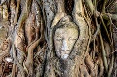 The palace complex Ayutthaya Thailand stock image