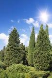 The Palace of count M.W.Vorontsov green park. Ukraine. Crimea. Ukraine. The Crimea peninsula. The Palace of count M.W.Vorontsov park royalty free stock photography