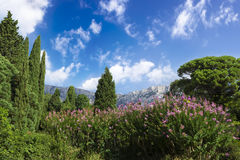 The Palace of count M.W.Vorontsov green park. Ukraine. Crimea. Ukraine. The Crimea peninsula. The park of count M.W.Vorontsov. Ai-Petri rock on background Royalty Free Stock Photo