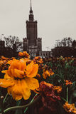 Palace of Culture and Science in Warsaw. Yellow flower at the feet of Palace of Culture and Science in Warsaw royalty free stock image