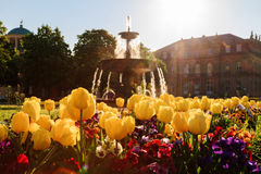 Palace Garden Fountain. Lovely Picture of Flowers in front of a fountain on a warm morning in the Stuttgart Palace Park, Germany Stock Photography