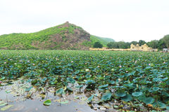 Palace on a lake bundi india. Lake covered in lotus flowers and mountain scenery with palace in background Stock Photography