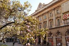 Palacio de Factory venerable del Duomo de Milán con las flores de la magnolia imágenes de archivo libres de regalías