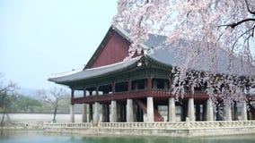 Palacio de Gyeongbokgung con el ?rbol de la flor de cerezo en tiempo de primavera en la ciudad de Seul de Corea, Corea del Sur almacen de video