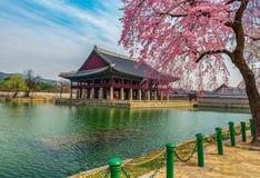 Palacio de Gyeongbokgung con la flor de cerezo Fotografía de archivo libre de regalías