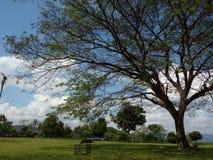 Palacio de Ratu Boko: El jardín fotografía de archivo libre de regalías
