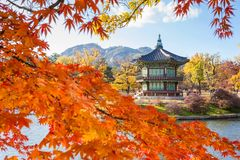 Palacio en otoño, Seul, Corea del Sur de Gyeongbokgung fotos de archivo