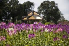 Palacio real en tonalidad, Vietnam fotografía de archivo libre de regalías